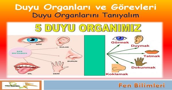 Duyu organları ve görevleri