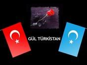 Gül Türkistan