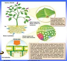 Fotosentez biyoloji genel