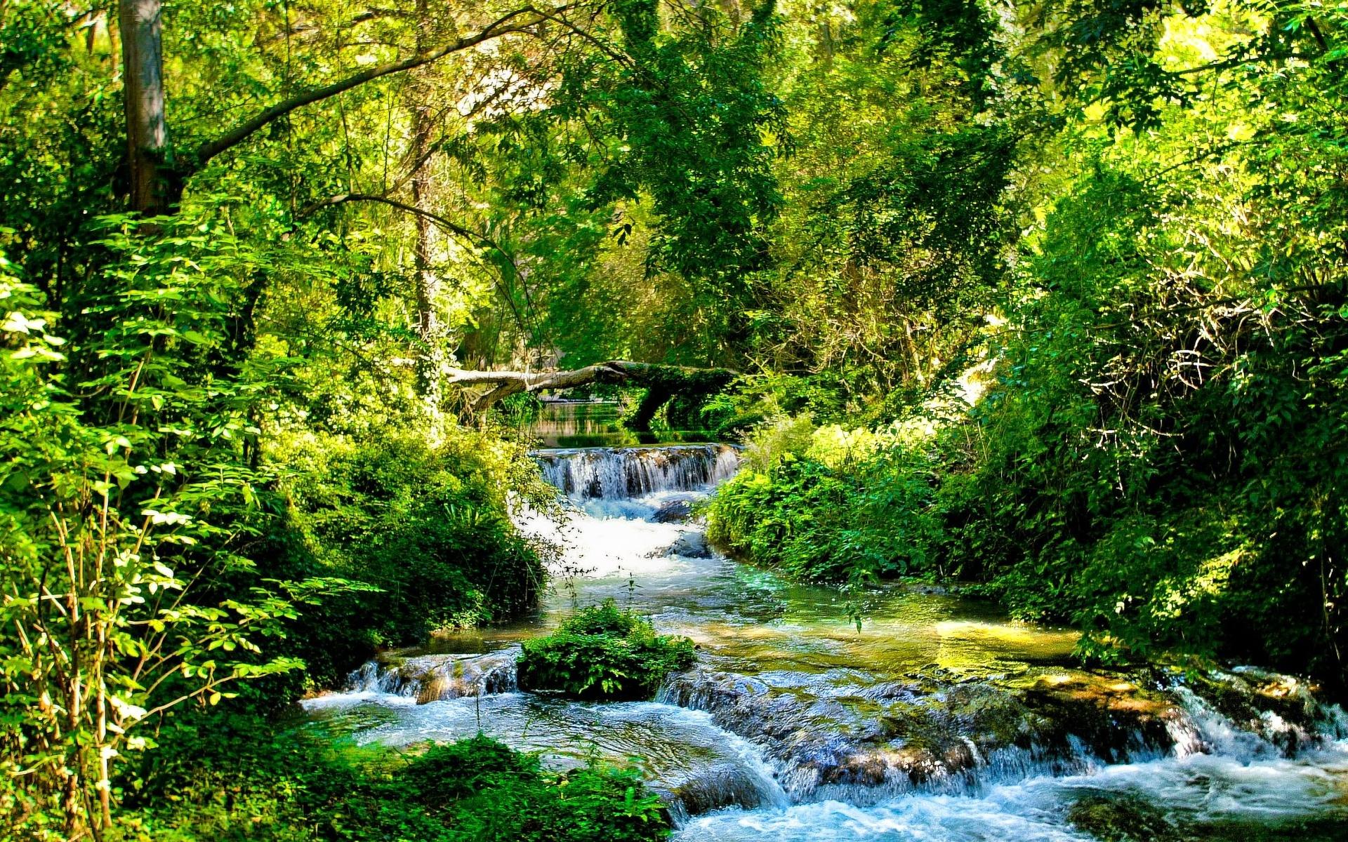 лесной ручей  № 1489972 бесплатно