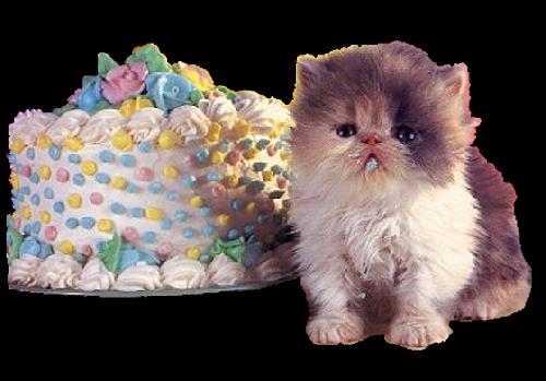 Birthday cake with cat