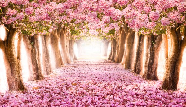 Romantic Spring Landscape
