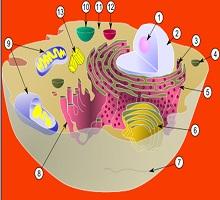 Canlılar ve Hücre