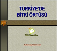 Türkiye de bitki örtüsü