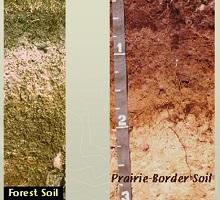 Toprakta Ph tuzluluk kireç ve bitkiler için önemi