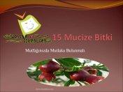 15 Mucize Bitke