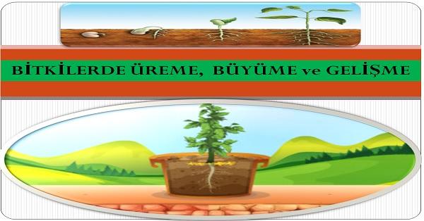 Bitkilerde üreme büyüme ve gelişme