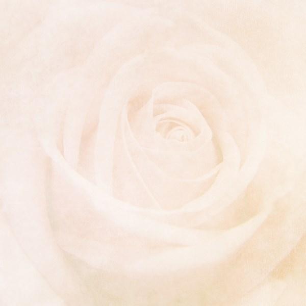 Rose Patterned Background