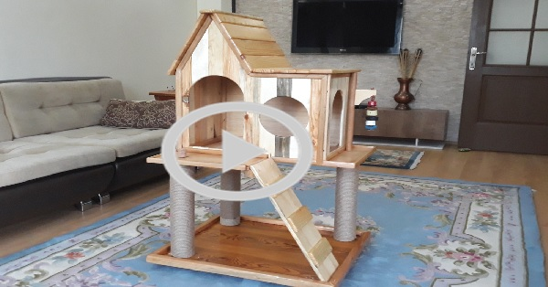 Bir kedi evi nasıl yapılır - KENDİN YAP