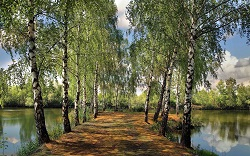 Natural Landscape