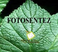 Fotosentez 1