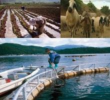 Türkiye de tarım ve hayvancılık