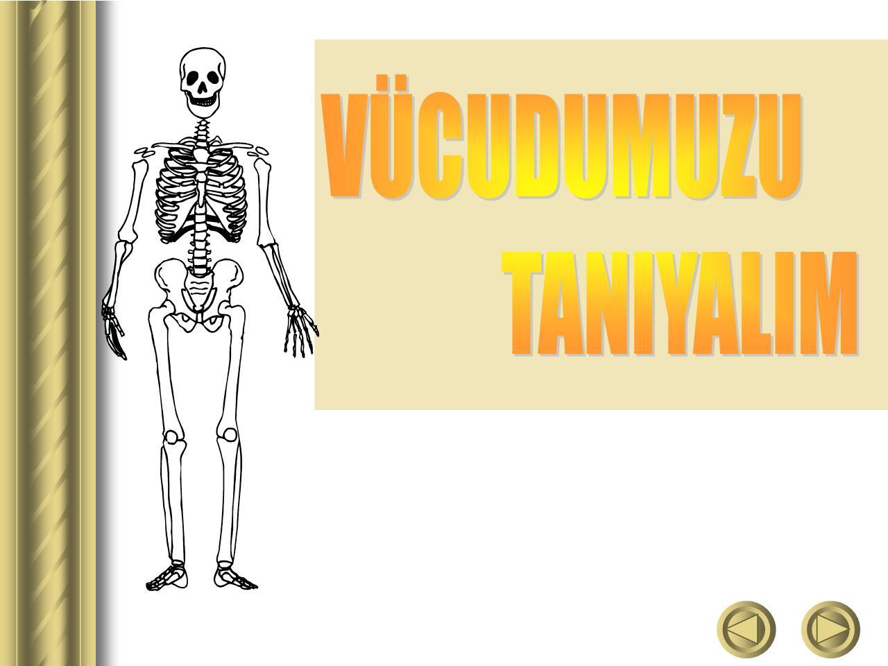 Vücudumuzu Tanıyalım 2