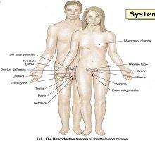 Anatomiye Giriş Dersleri