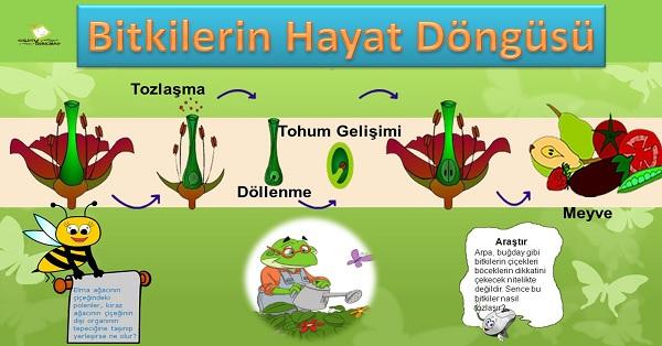 Bitkilerin hayat döngüsü