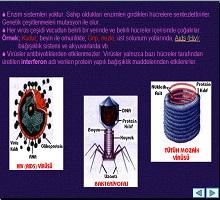 Canlıların Sınıflandırılması Virüsler