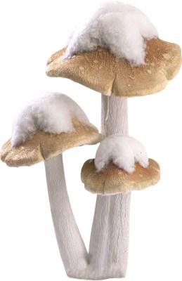 Mushroom with snow