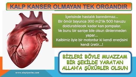 Kanser olmayan tek organ