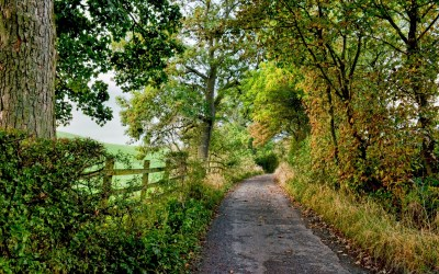 Pathway Landscape