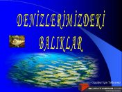 Denizlerimizdeki balıklar